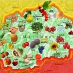 Македония клад здорового питания